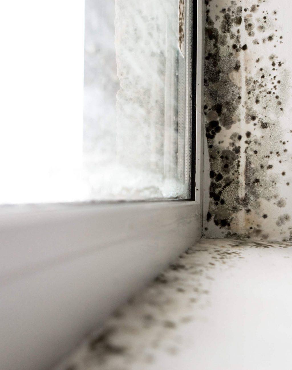 condensation pic 9